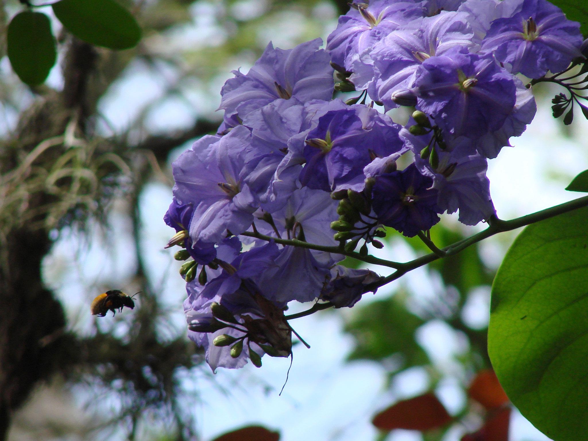 На их фоне цветок лимонного дерева